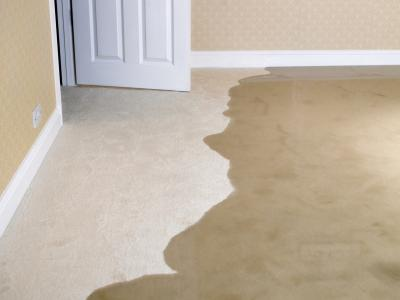 Ing Water Out Of Carpet, Get Water Out Of Basement Carpet