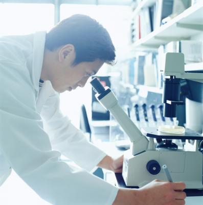 Microbiology Medical Technologist Job Description   Chron.com
