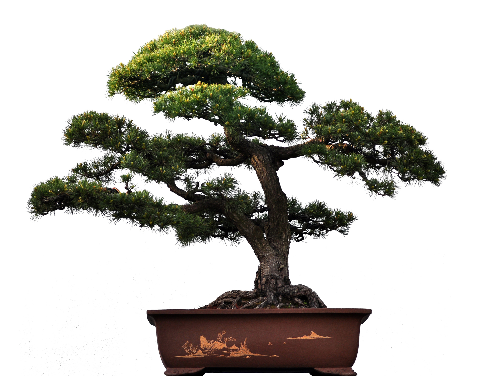 What Is The Meaning Of A Bonsai Tree