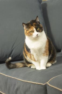 Homemade Diabetic Cat Food - Pets