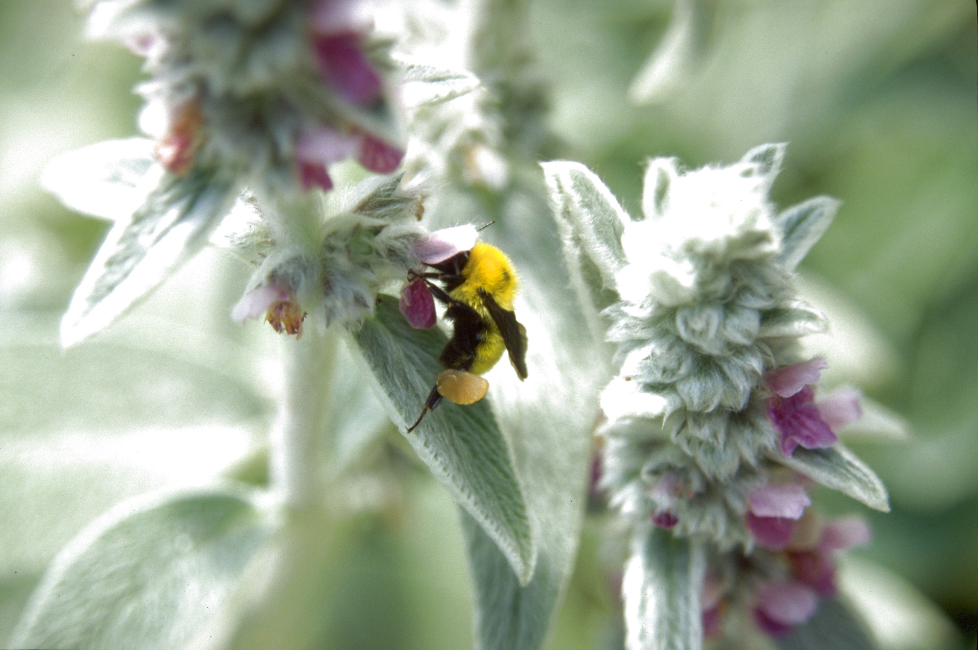 Does Lime Kill Bees? | Garden Guides