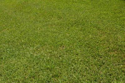 Centipedegrass Yellow Grass Problems