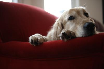 How To Protect Hardwood Floors From Dogs Home Guides Sf Gate