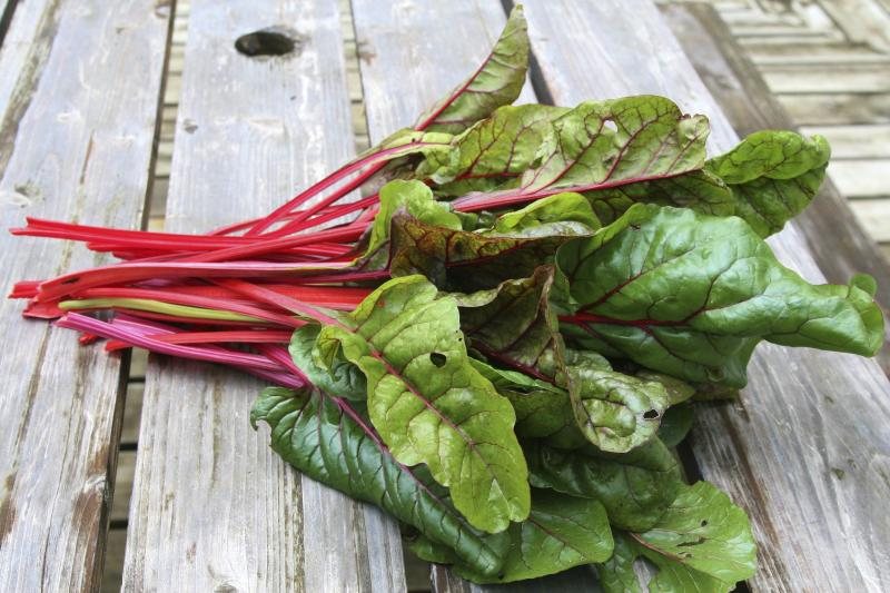 Are The Stalks Or Stems Of Ruby Red Swiss Chard Poisonous