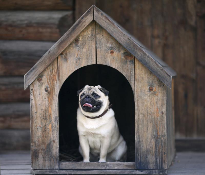 Outdoor Dog Kennel Flooring Ideas, Outdoor Kennel Flooring Ideas