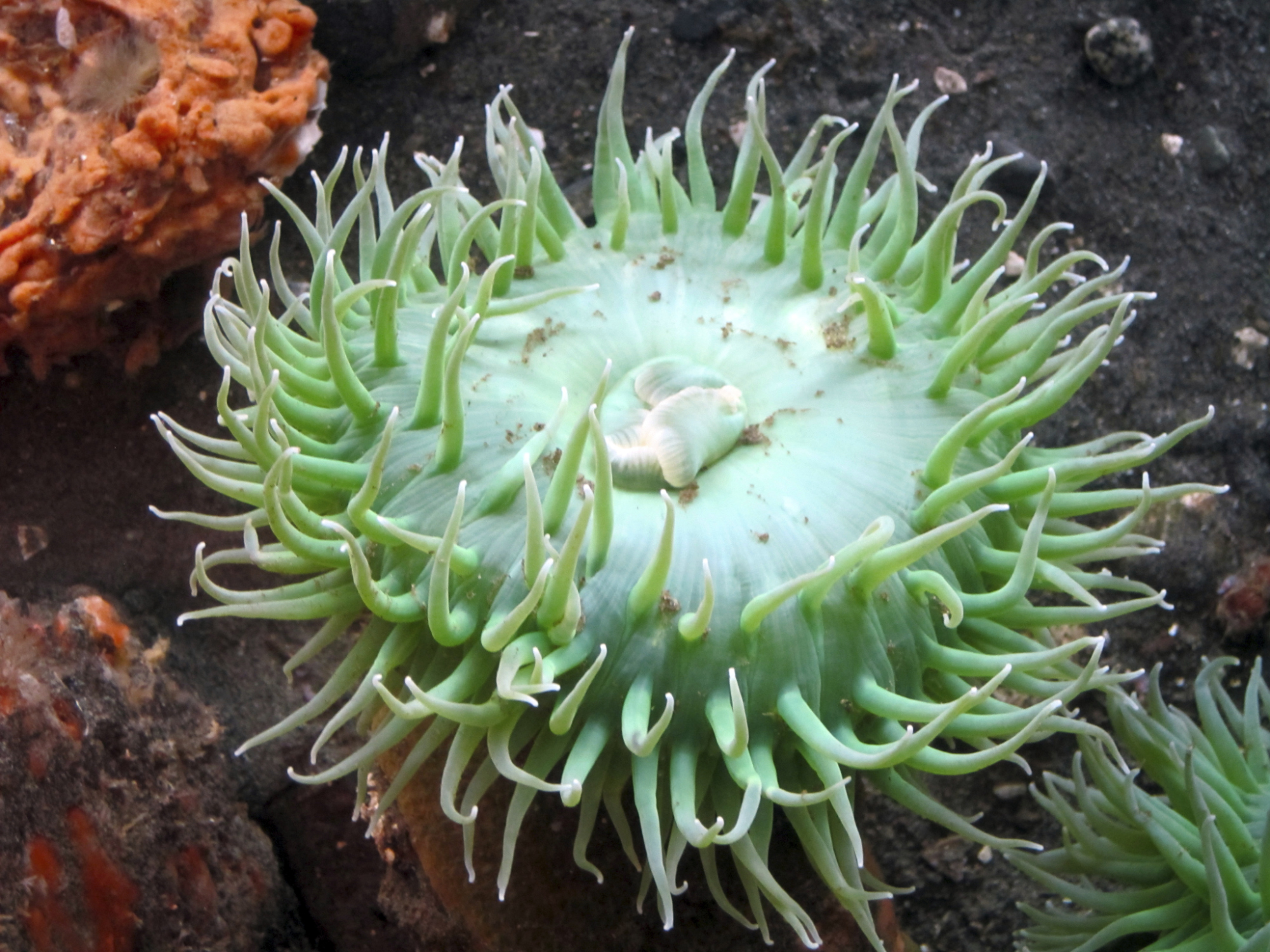 Ananomie Videos how to tell if your anemone is dead | animals - mom